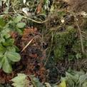 Groen en tuinafval